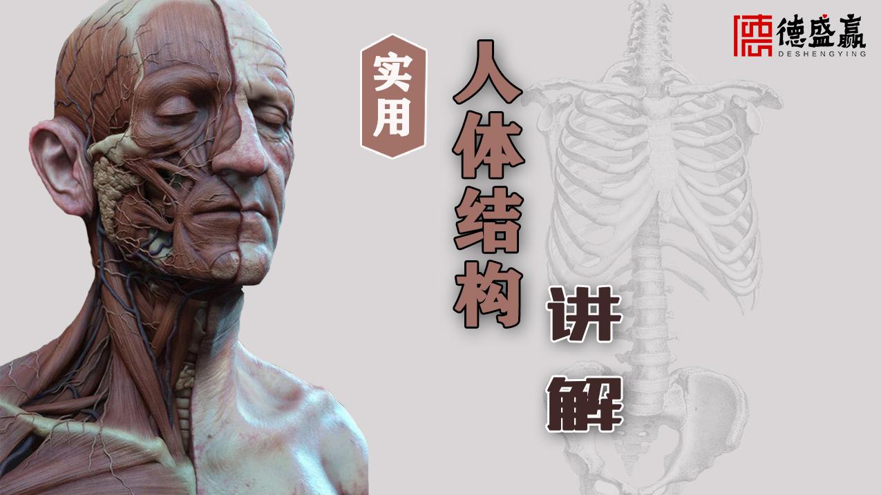 【德盛赢】史上最实用干货讲解人体结构,让你少走弯路