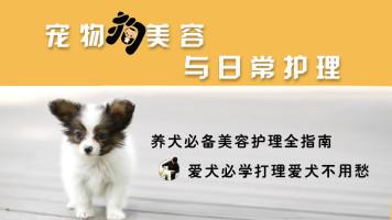宠物狗美容与日常护理