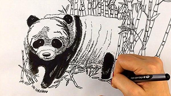 【雅盛美术】教你画线描《熊猫》适合7岁以上美术爱好者