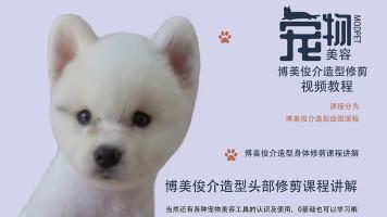 宠物美容视频,宠物美容教程,博美俊介造型美容视频,博美美容视频