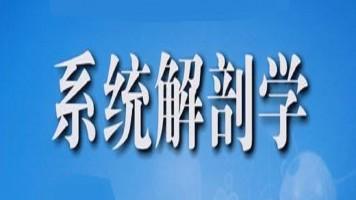 系统解剖学(全50讲)【理工学社】