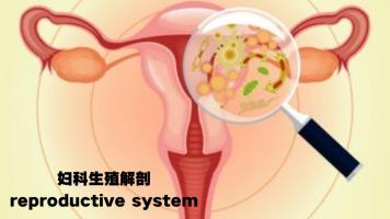 ISPN/RN课程培训国际护士出国-妇科生殖解剖