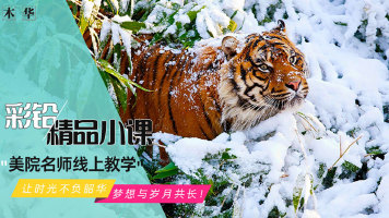 彩铅写实动物《虎》