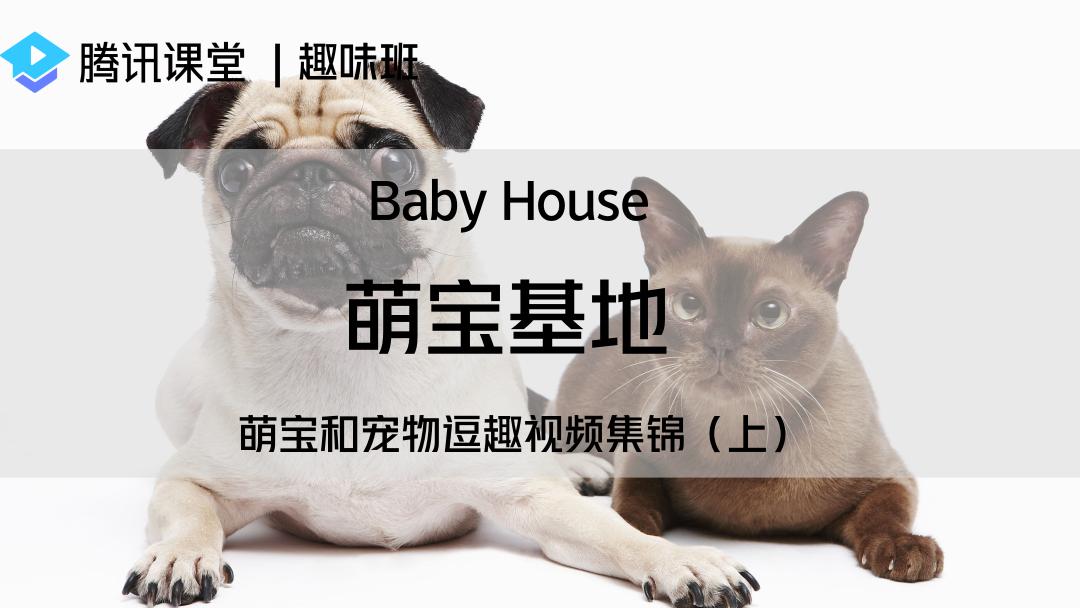 趣味班|萌宝基地——萌宝和宠物逗趣视频集锦(上)