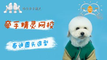 宠物美容泰迪日韩系圆头示范教程