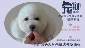 泰迪美容视频,宠物美容视频,宠物美容师培训教程,泰迪剪毛视频