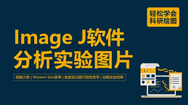 【益加医】科研绘图:Image J软件分析实验图片