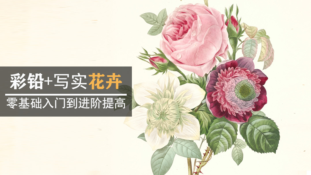 彩铅手绘花卉/水果/植物基础教程