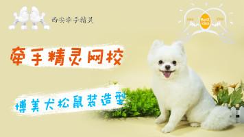 宠物美容日韩系博美松鼠装示范教程
