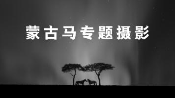 蒙古马专题摄影