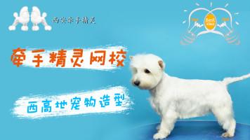 宠物美容西高地宠物装示范教程
