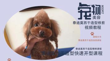 泰迪美容视频,宠物美容视频,萌系宠物美容视频教程,宠物美容教程