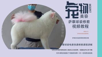 宠物美容视频,宠物美容教程,萨摩美容视频,宠物美容师培训教程