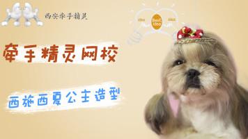 宠物美容西施日韩系创意西夏公主头