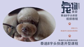 泰迪美容视频,宠物美容视频,宠物剪毛视频,萌系宠物美容视频教程