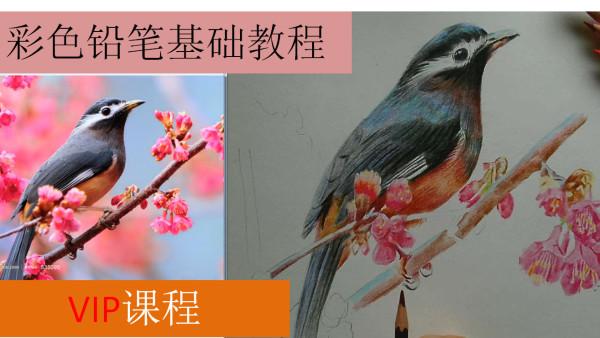 彩铅基础绘画彩铅画教程写实花鸟轻松学彩铅素描