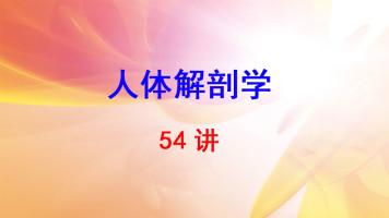 中国医科大学 人体解剖学 李洪鹏 54讲