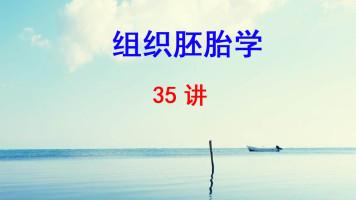 上海交通大学医学院 组织胚胎学 徐晨 35讲